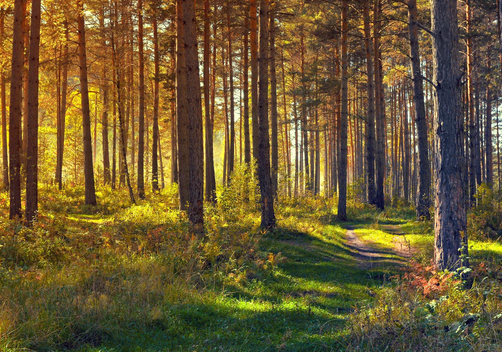 september-in-the-forest-1347854948DKj (1)